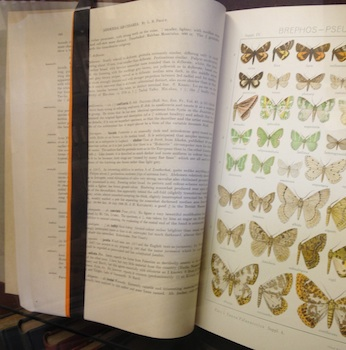 book of butterflies